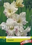 Гладиолус крупноцветковый CHANTAL, 3 шт.