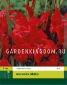 Гладиолус карликовый AMANDA MAHY, 3 шт.