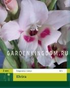 Гладиолус карликовый ELVIRA, 3 шт.