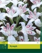 Гладиолус карликовый NYMPH, 3 шт.