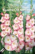 Гладиолус крупноцветковый БЬЮТИ ОФ ХОЛАНД, 7 шт.