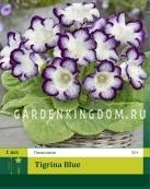 Глоксиния TIGRINA BLUE, 1 шт.