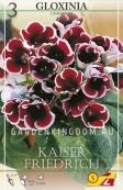 Глоксиния KAISER FRIEDRICH, 3 шт.