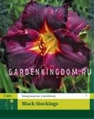 Лилейник (хемерокаллис) BLACK STOCKINGS,  1 шт.