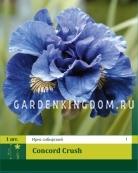Ирис сибирский CONCORD CRUSH, 1 шт.