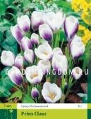 Крокус ботанический  PRINS CLAUS, 15 шт