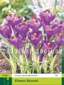 Крокус крупноцветковый FLOWER RECORD, 50 шт
