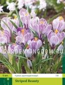 Крокус крупноцветковые STRIPED BEAUTY, 5 шт