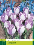 Крокус ботанический   VANGUARD, 5 шт