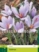 Крокус ботанический  CROCUS SATIVUS, 3 шт