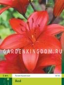 Лилия азиатская ASIATIC RED, 1 шт