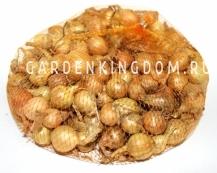 Лук-севок Штутгартер желтый,  0,5 кг. крупный