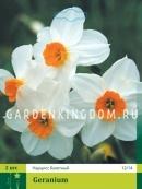 Нарцисс мелкокорончатые  GERANIUM, 2 шт