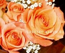 Роза флорибунда ORANGE SENTA
