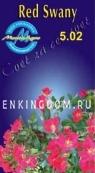 Роза почвопокровная RED SWANY
