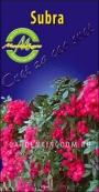 Роза плетистая SUBRA