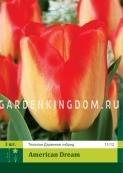 Тюльпан Дарвинов гибрид AMERIKAN DREAM, 3 шт