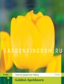 Тюльпан Дарвинов гибрид GOLDEN APELDOORN, 3 шт