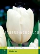 Тюльпан Дарвинов гибрид HAKUUN, 3 шт