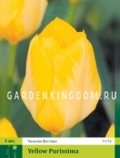 Тюльпан Фостера  YELLOW PURISSIMA, 3 шт