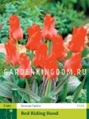 Тюльпан Грейга RED RIDING HOOD, 3 шт