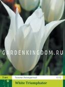 Тюльпан лилейный  WHITE TRIUMPHATOR, 3 шт