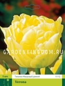 Тюльпан махровый ранний VERONA, 3 шт