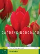 Тюльпан многоцветковый ROULETTE, 3 шт