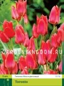 Тюльпан многоцветковый TORONTO, 3 шт