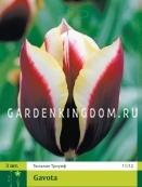 Тюльпан триумф  GAVOTA, 3 шт