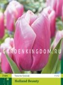 Тюльпан триумф  HOLLAND BEAUTY, 3 шт