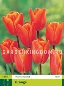 Тюльпан триумф  ORANGE, 3 шт