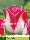 Тюльпан триумф  PAGE POLKA, 3 шт