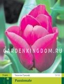 Тюльпан триумф  PASSIONALE, 3 шт