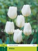 Тюльпан триумф  WHITE, 3 шт