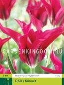 Тюльпан зеленоцветковый  DOLLS MINUET, 3 шт
