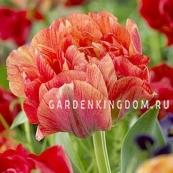 Тюльпан пионовидный  GUDOSCHNIK DUBBEL, 3 шт