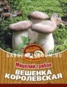 Вешенка королевская, мицелий на древесных палочках, 16 шт.