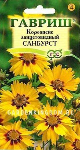 Кореопсис ланцетовидный  Санбурст,  0,1 г.