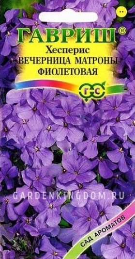 Хесперис Вечерница Матроны  фиолетовая,   0,1 г.