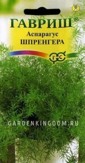 Аспарагус Шпренгера, 5 шт.