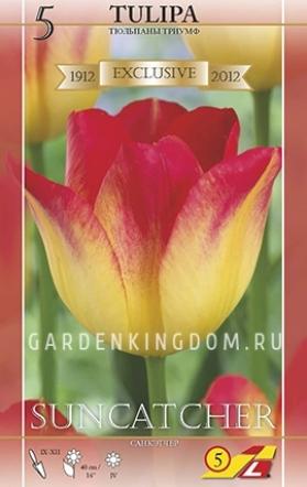 Тюльпан триумф  SUNCATCHER, 5 шт