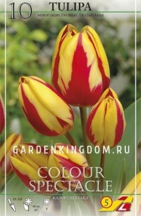 Тюльпан многоцветковый COLOUR SPECTACLE, 10 шт