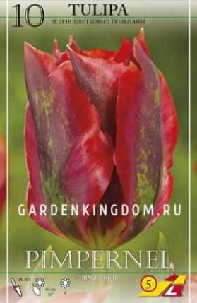 Тюльпан зеленоцветковый  PIMPERNEL, 10 шт