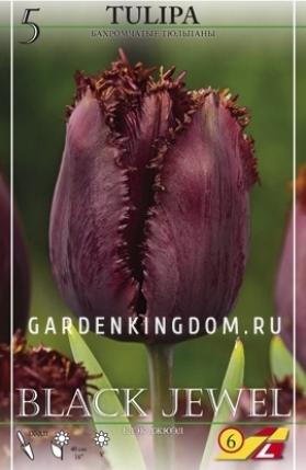 Тюльпан бахромчатый  BLACK JEWEL, 5 шт