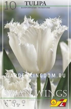 Тюльпан бахромчатый  SWAN WINGS, 10 шт