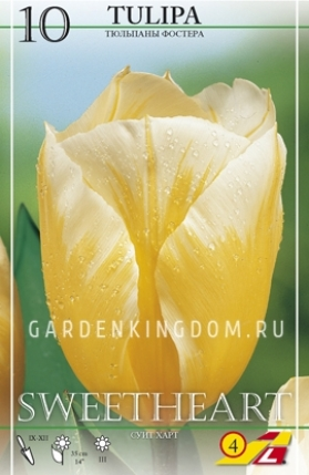 Тюльпан Фостера SWEETHEART, 10 шт