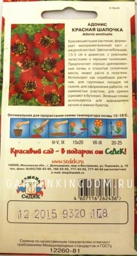 Адонис Красная Шапочка, 1 г.