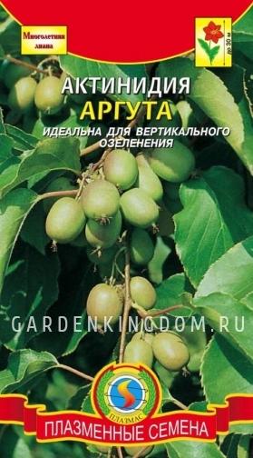 Актинидия Аргута, 10 шт.