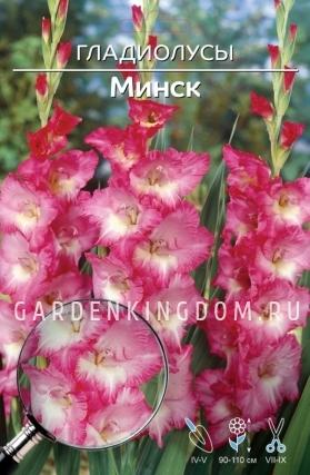 Гладиолус крупноцветковый МИНСК, 5 шт.